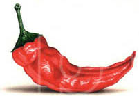 artist of red peppers